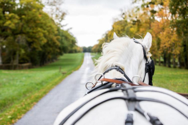 La route du poisson, manifestations dédiées aux chevaux de trait