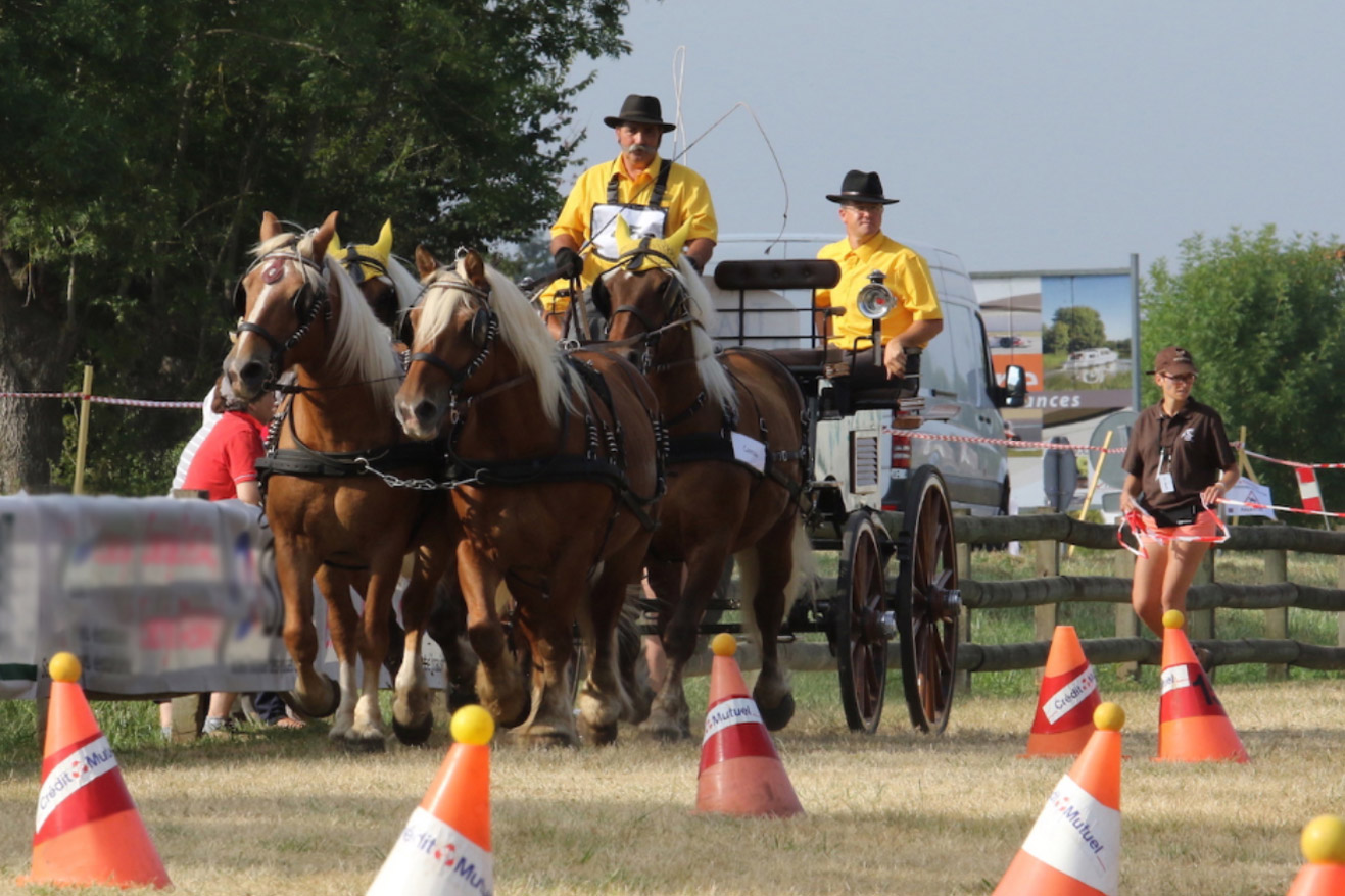 épreuve spéciales 4 du 23/09 : maniabilité à quatre chevaux