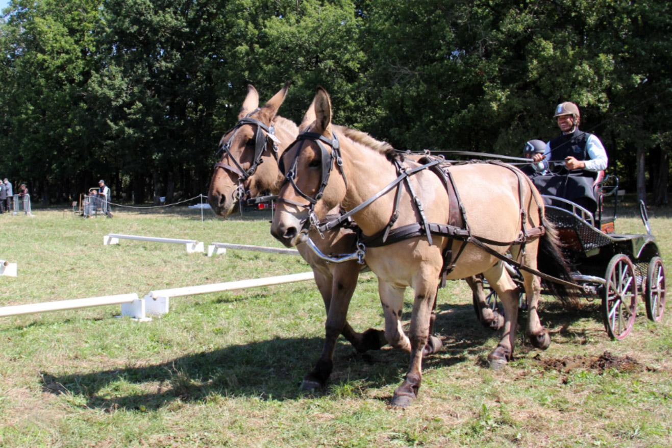 épreuve spéciales 6 du 24/09 : maniabilité urbaine en paire (cheval utilitaire)